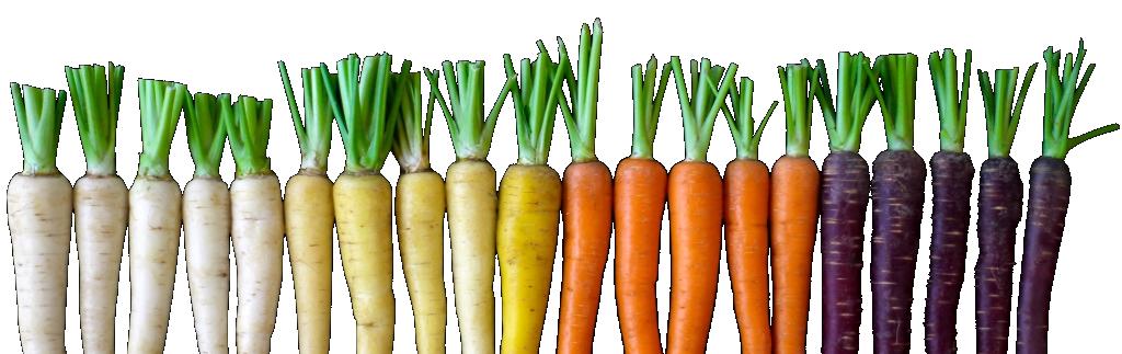 zanahorias varias